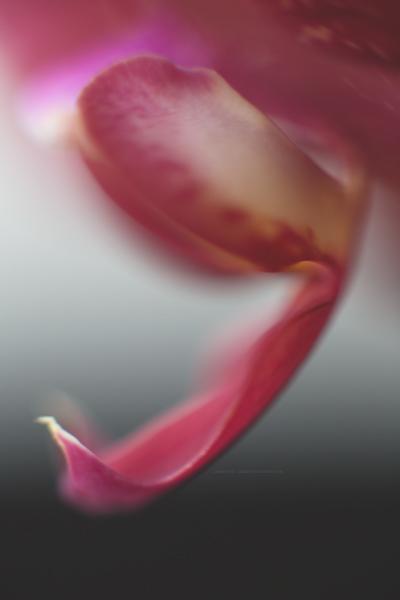 orchideemars16-1
