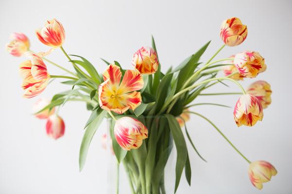 tulipesbouquetgerda04-16