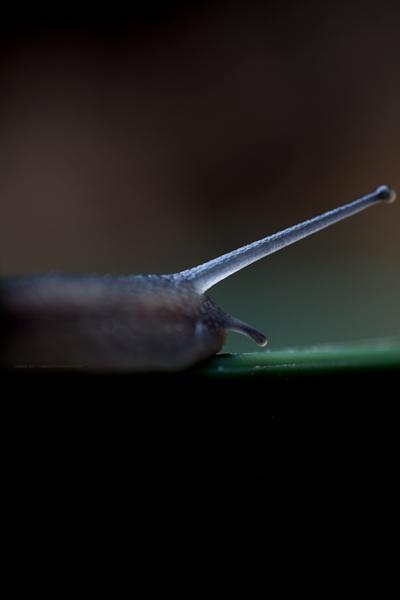 escargotsuperhero