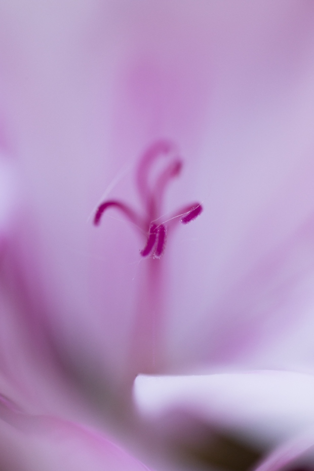 geraniuminterieurhello5-16