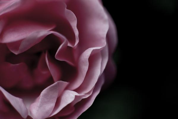 roseprofil27-5-16