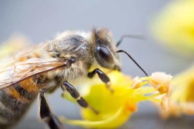 abeille29-7-16