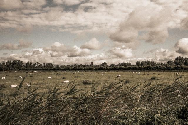 landscapebetuwe6-7-16