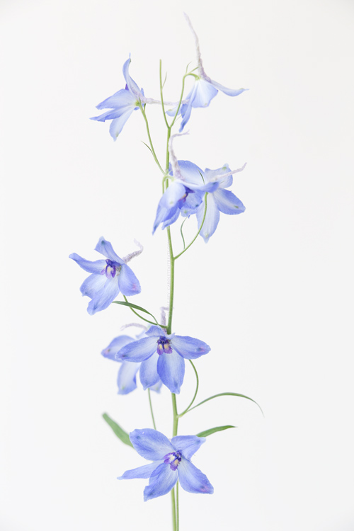 fleursbleusbouquetrudi20-9-16