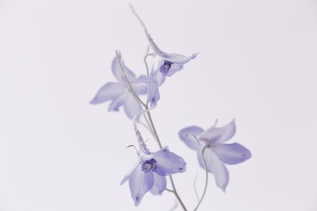 fleursbleueslegeres24-09-16