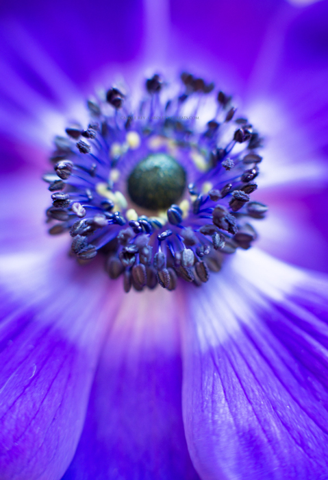 anemone1-2-17-2
