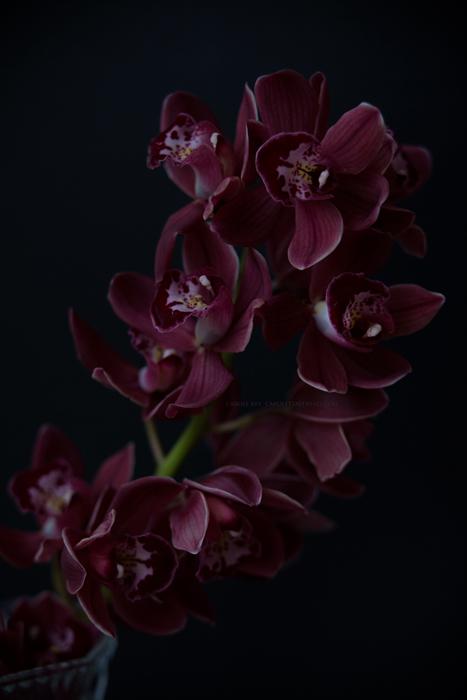 orchidee23-2-17-1