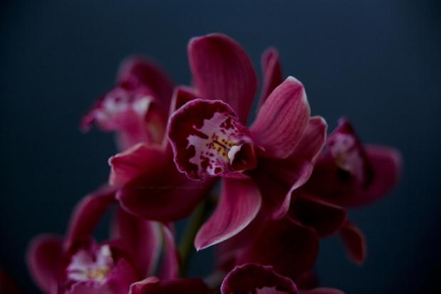 orchidee3-3-17-5