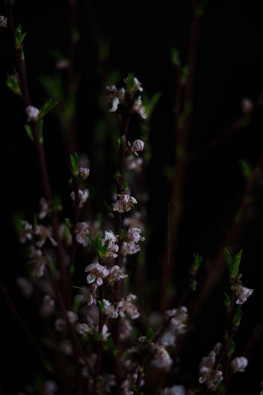 cerisier05-3-17-6