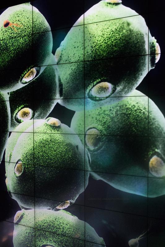 Micropia-9