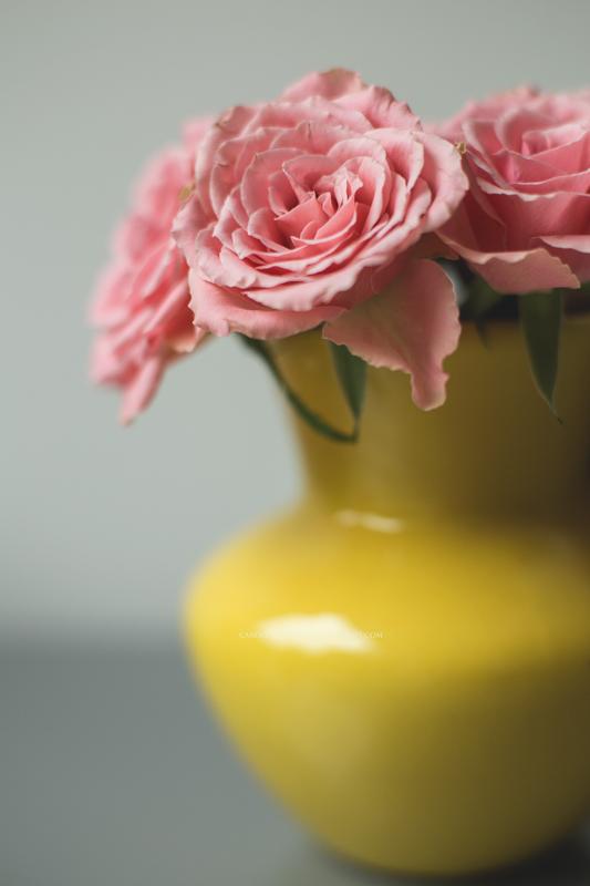 rosewomeninthenetherlands-1