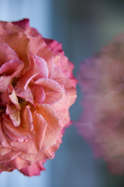 Rose29-6-17-1