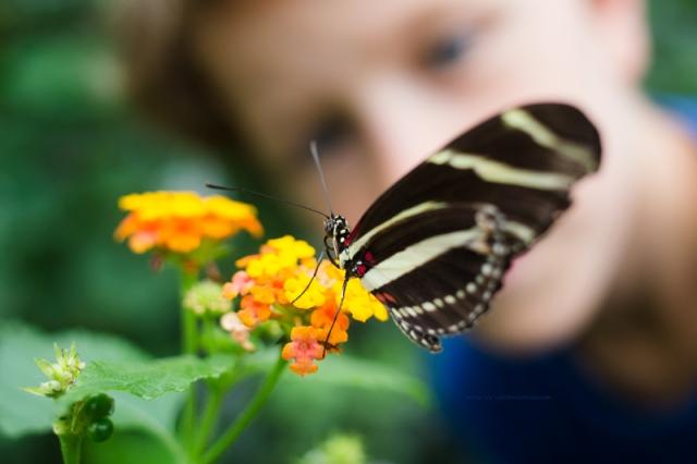 Papillon11-7-17-3b