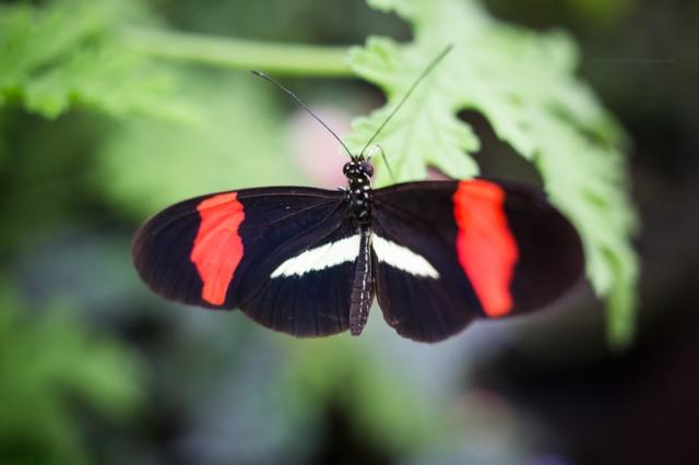 Papillon11-7-17-4