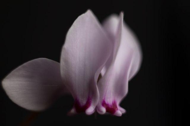 FleurInconnue3-11-17-4